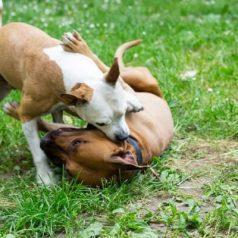 dog eat dog - training tips