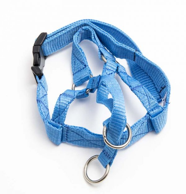 head halter blue