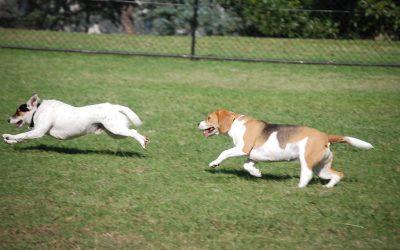 Dog Parks – Paradise or Purgatory?