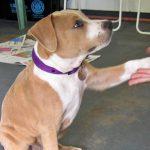 puppy shaking hands
